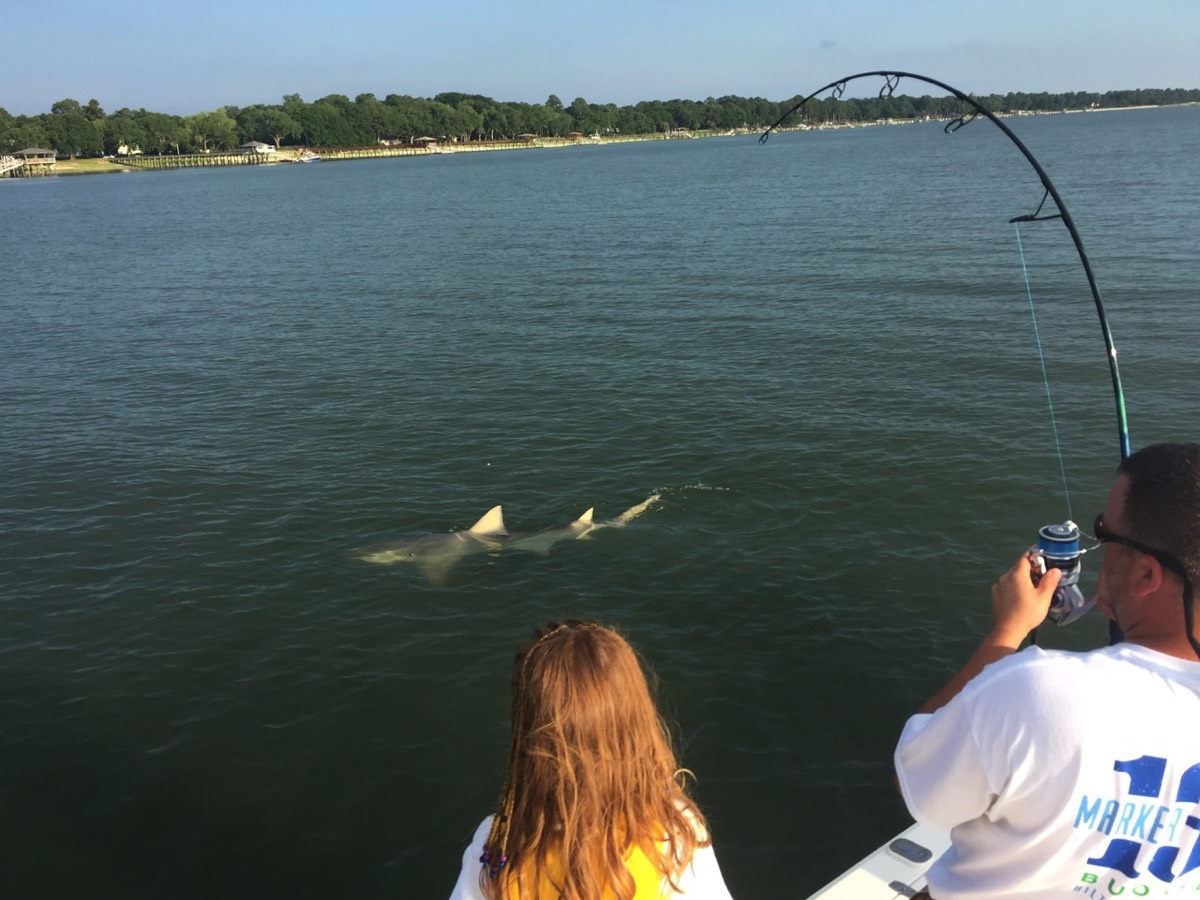 monster lemon shark caught fishing in Hilton Head